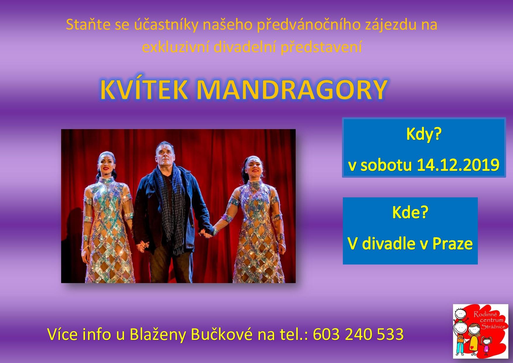 pozvnka-kvtek-mandragory